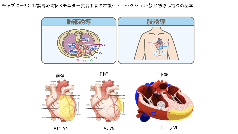 【全11回】心電図はこれだけ覚えよう!